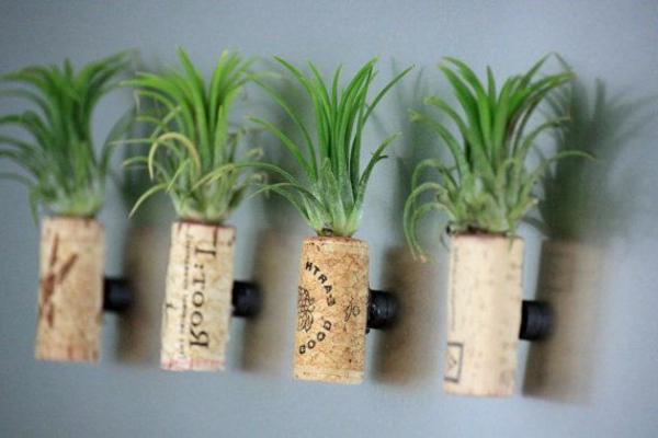 vier-korken-mit-grünen-pflanzen-tolle-idee