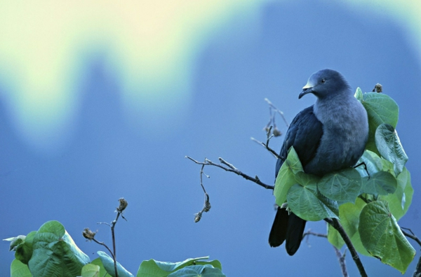 Wandfarbe Taubenblau - mit der Bescheidenheit der Tauben spielen! - Archzine.net