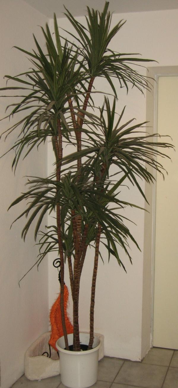 wunderschöne-palmenarten-für eine gemütliche wohnung