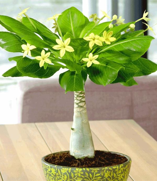 wunderschöne-pflanze-in-grün-gelbe blümchen