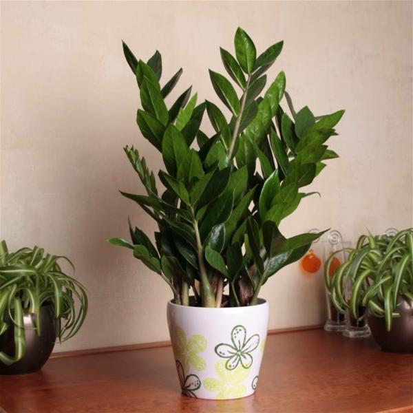 Zimmerpflanze Pflegeleicht pflegeleichte zimmerpflanzen 18 vorschläge archzine