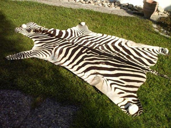 zebrafell-möbel-echt
