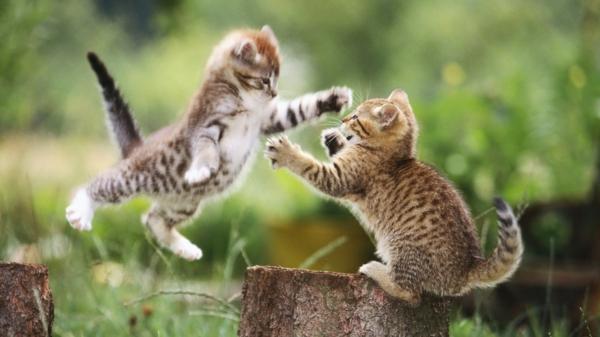 zwei-kleine-süße-katzen-spielen-schöne-tierbilder- super süß