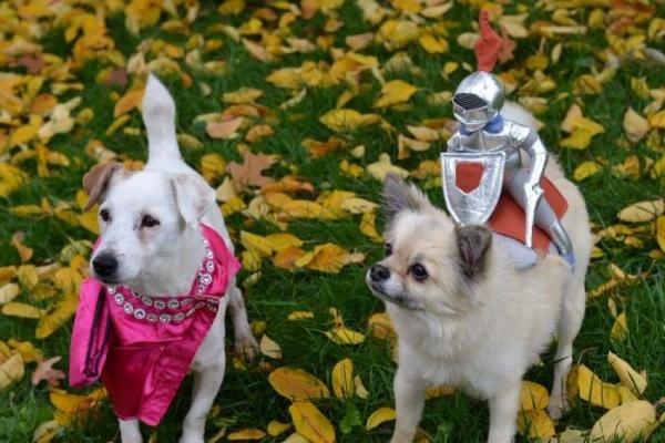 zwei-süße-angekleidete-hunde-schöne-tierbilder- sehr komisch aussehen