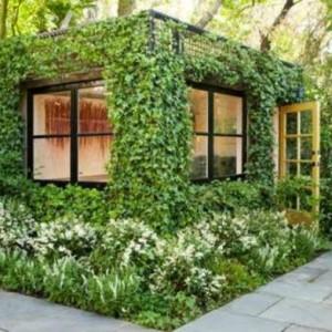 Immergrüne Kletterpflanzen - tolle Bilder!
