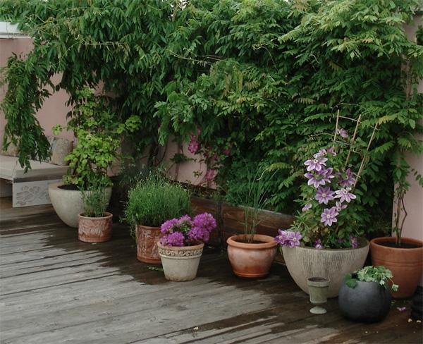grüne-Kletterpflanzen-schöne-Gartengestaltung
