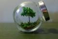 Terrarium selbst bauen oder wie erstellt man eine Mini -Pflanzenwelt!