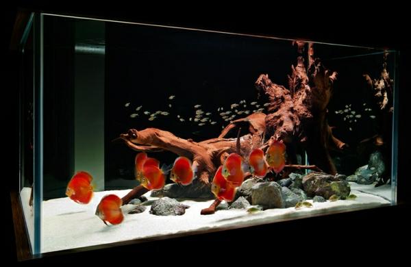 aquarium-raumteiler-dunklere-gestaltung - interessante gestaltung