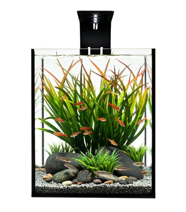 aquarium-raumteiler-hintergrund-in-weiß - moderne gestaltung