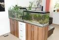 Aquarium als Raumteiler benutzen – 26 Beispiele!