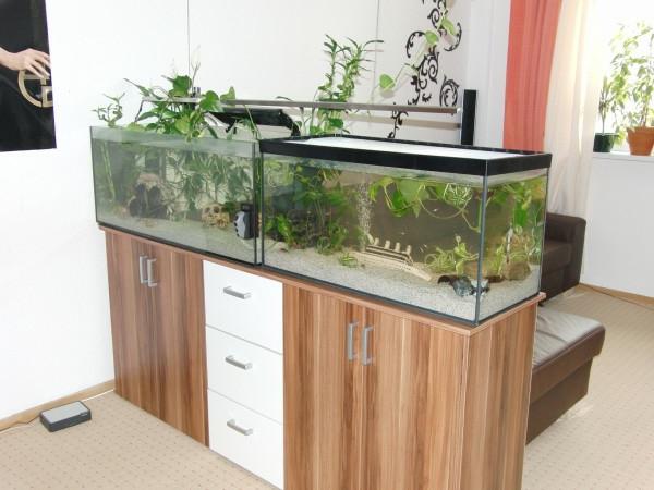 aquarium-raumteiler-im-zimmer-mit-weißen-wänden - und einem unterschrank