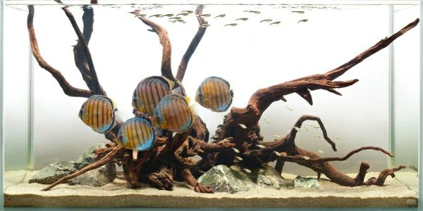 aquarium-raumteiler-interessantes-design