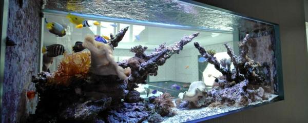 aquarium-raumteiler-kreativ-aussehen