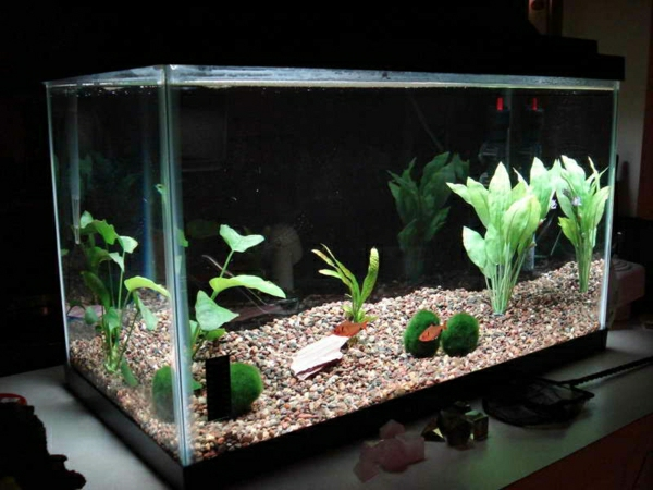 aquarium-raumteiler-modern-ausgestaltet