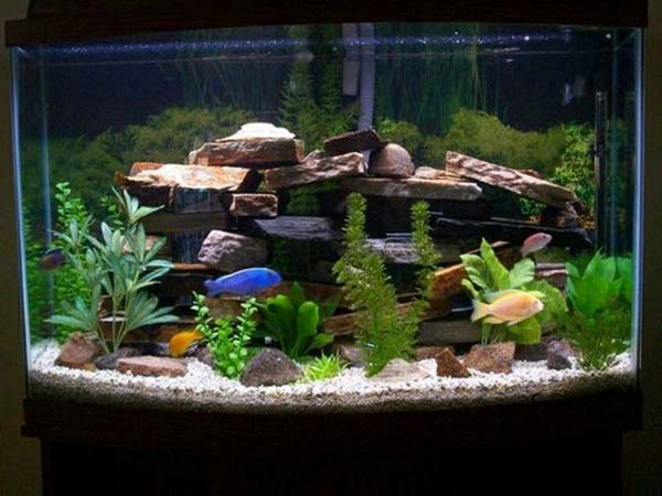 aquarium-raumteiler-schwarzer-hintergrund