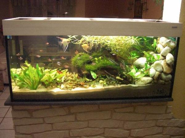 aquarium-raumteiler-steinwand - sehr interessanter look