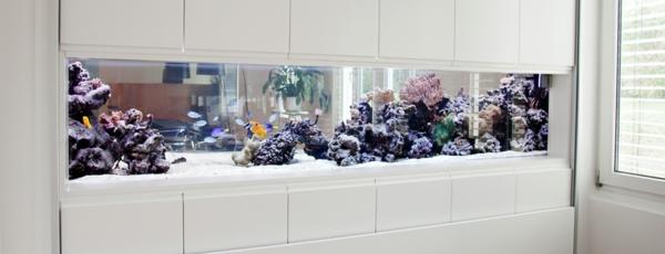 aquarium-raumteiler-weiße-gestaltung - ganz schön aussehen