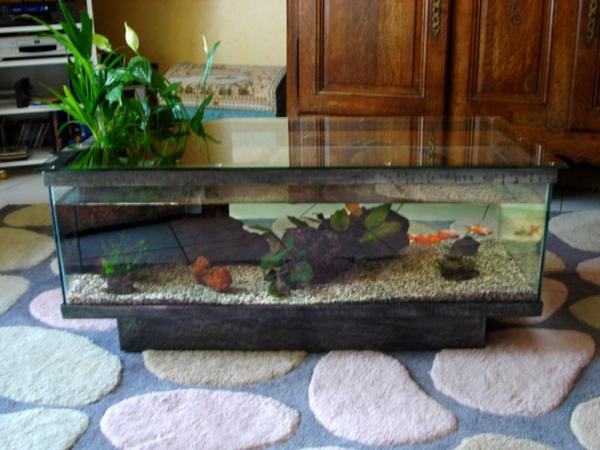 Aquarium Tisch Auf Teppich