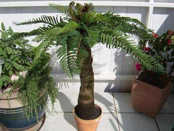 deko-palme-für-zuhause