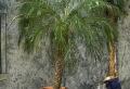 Warum ist die Deko – Palme so attraktiv?