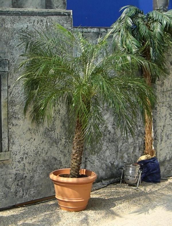 deko-palme-im-topf - super gestaltung