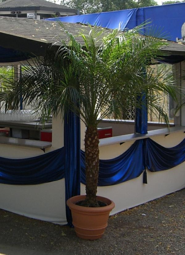 deko-palme-kreative-gestaltung