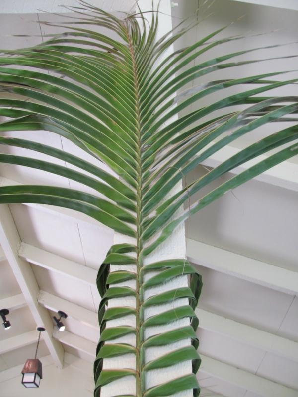 deko-palme-super-aussehen