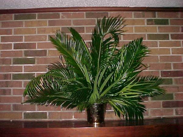 deko-palme-vor-einer-ziegelwand