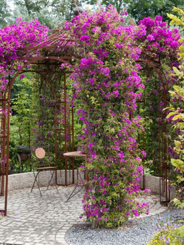 dekoideen-gartenlaube-kletterpflanzen