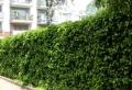 Immergrüne Kletterpflanzen – tolle Bilder!
