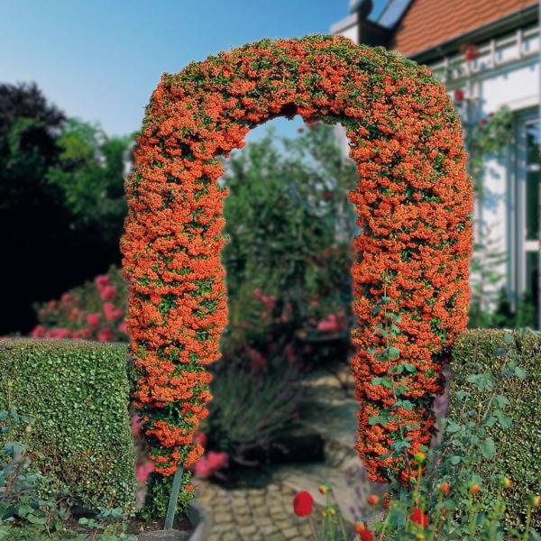 feuerdorn-arkade-gartendesignidee-orange