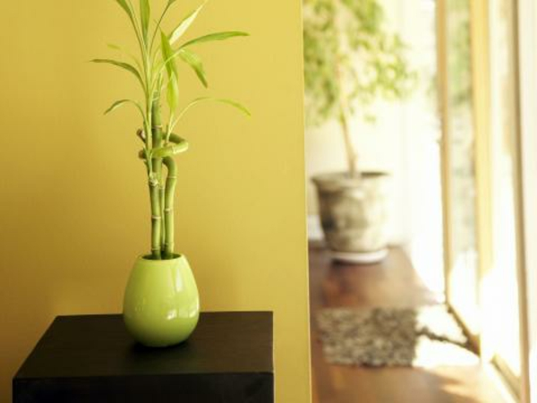 flur-warme-farben-wandfarben-flur-wanddeko-pflanze