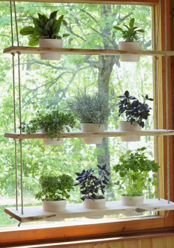 hängende-zimmerpflanzen-aufhänger