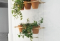 Hängende Zimmerpflanzen können die beste Hänge – Dekoration sein!