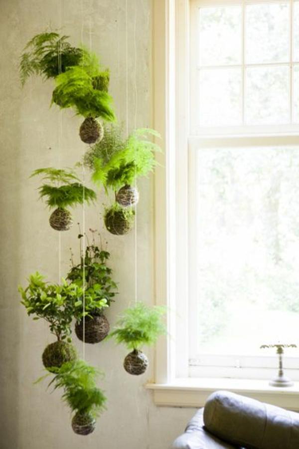 H ngende zimmerpflanzen k nnen die beste h nge for Pflanzen zimmer