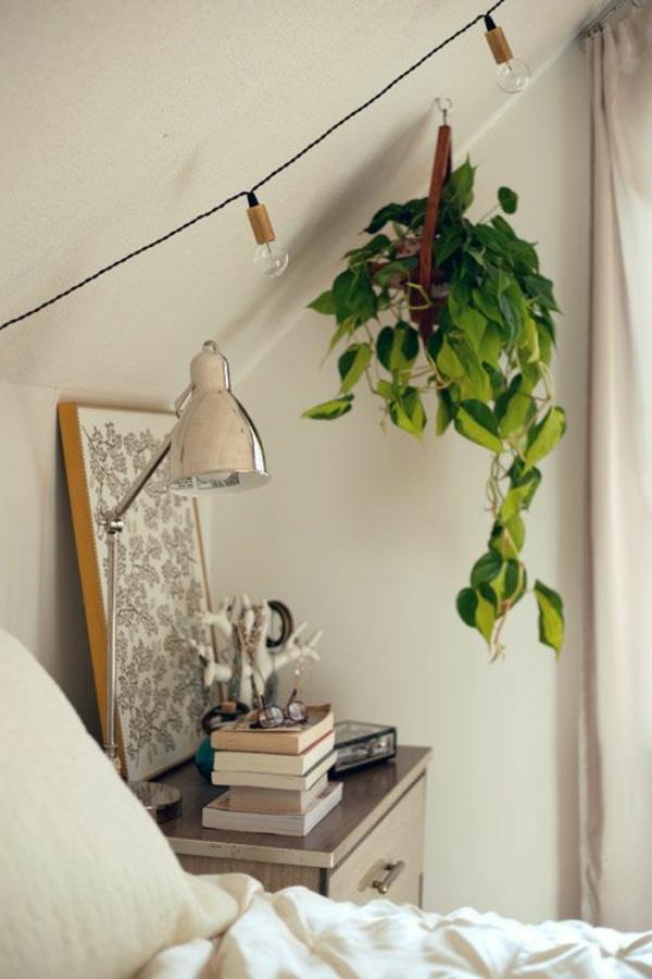 hängende-zimmerpflanzen-grüne-pflanze