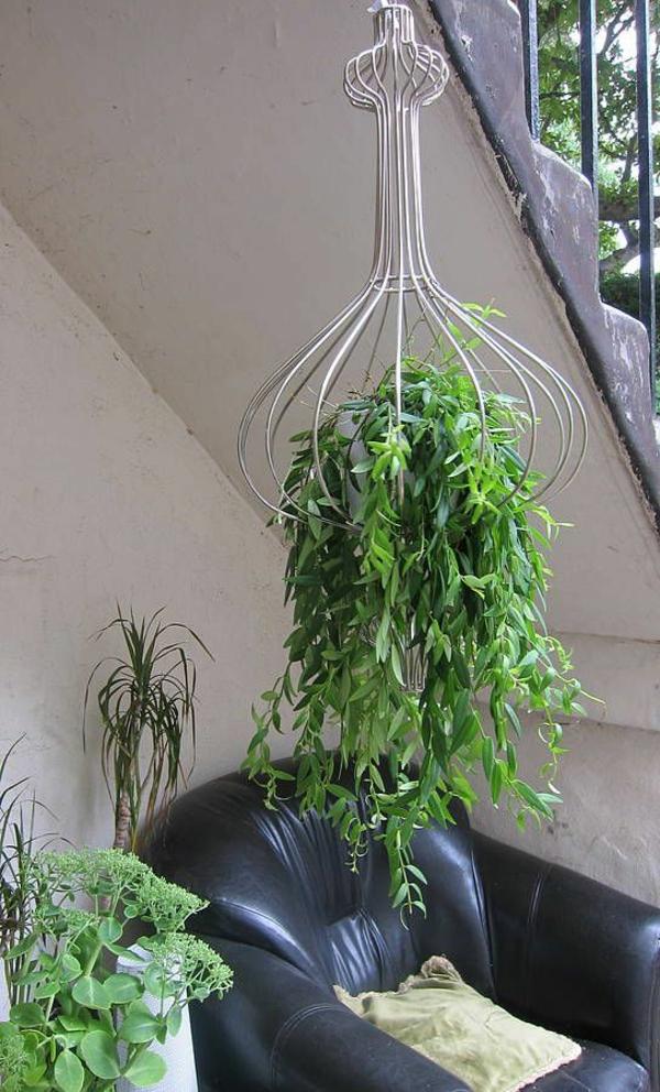 hängende-zimmerpflanzen-hänger-mit-interessanter-form