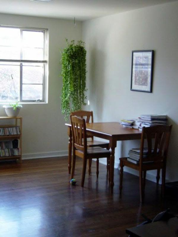 hängende-zimmerpflanzen-in-der-ecke