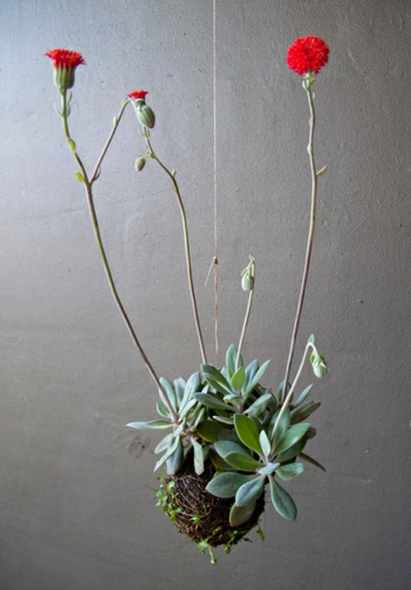 hängende-zimmerpflanzen-kreativ