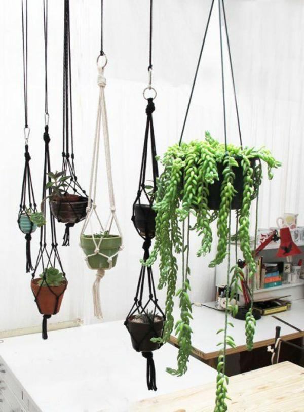 hängende-zimmerpflanzen-sail-hängend