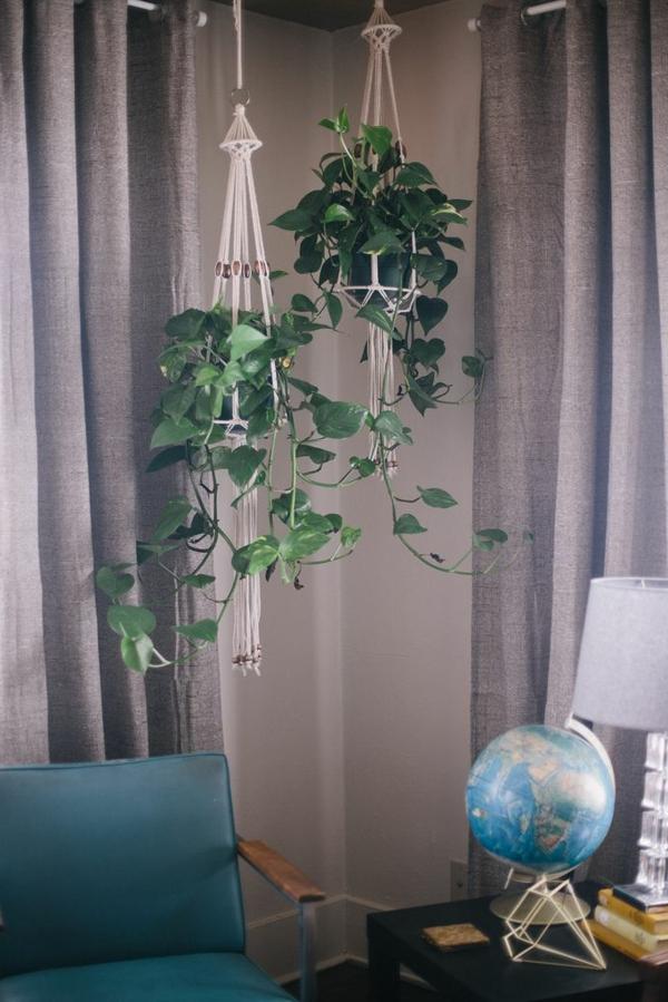 hängende-zimmerpflanzen-sail-körbe