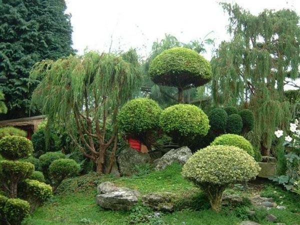 Traumgarten erstaunliche bilder - Tall trees for small spaces style ...
