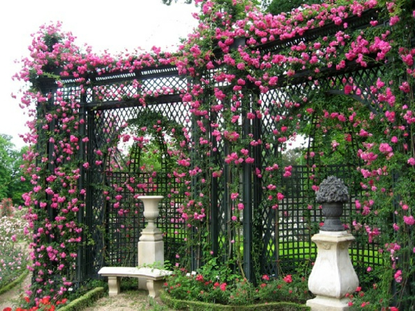 kletterpflanzen-für-zaun-rosa-rosen