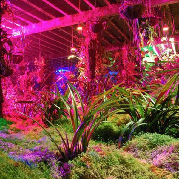 led-gartenbeleuchtung-zyklamenfarbe