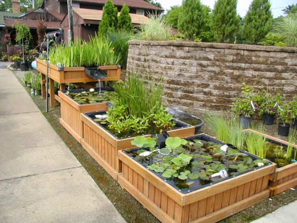 teich-bepflanzen-auffällige-idee