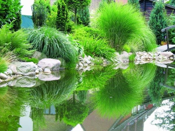 teich-bepflanzen-grünes-foto