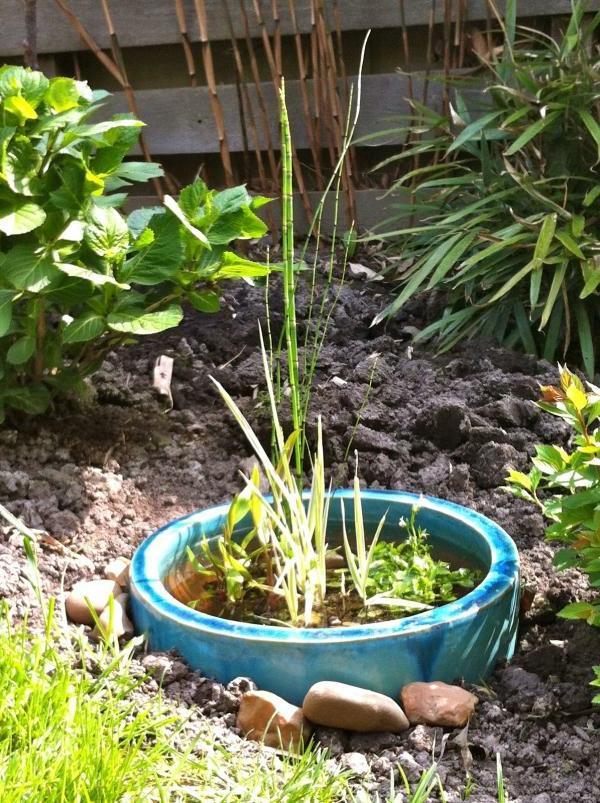 teich-bepflanzen-im-garten