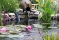 Teich bepflanzen – 65 super Ideen!