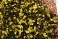 Blühende Kletterpflanzen -wunderschöne Fotos!