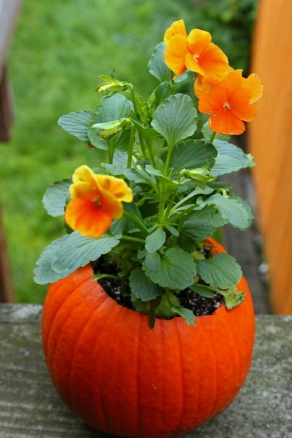 Blumen-in-einem-Kürbis-Deko-Idee